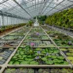 伊豆の世界一スポット 熱川バナナワニ園と、フルーツパーラーのプリンアラモード