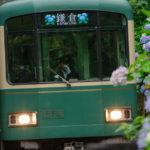梅雨の風物詩 鎌倉の紫陽花を楽しむ寺巡りと、パーラー扉のパングラタン
