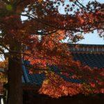 伊豆の温泉郷 修善寺温泉の紅葉と、さくだの塩そば