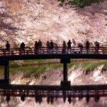 満開の弘前さくらまつり 弘前公園の夜桜と、朝日屋日影食堂の大鰐温泉もやしラーメン